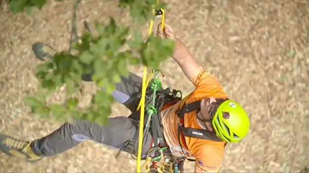 ağaç tırmanış sporu