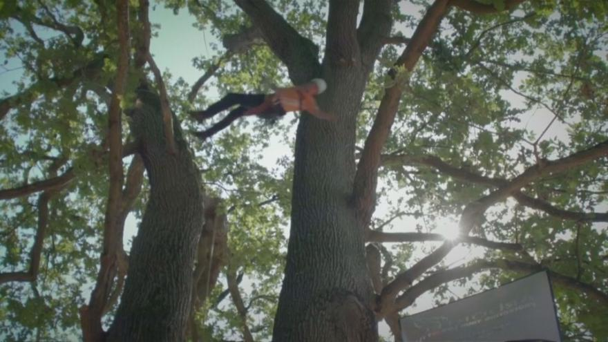 Los reyes de los árboles