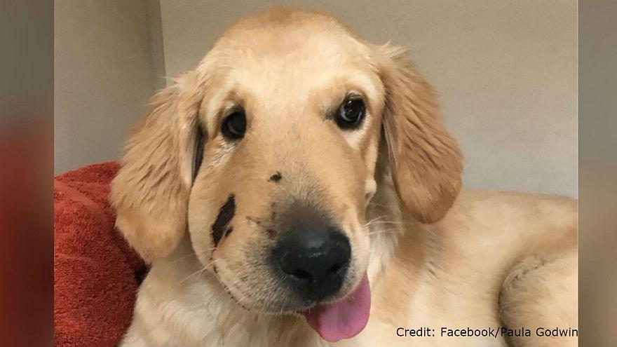 Hero pup saves owner from rattlesnake bite in Arizona