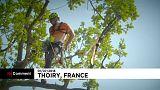 Championnat d'Europe des arboristes-grimpeurs