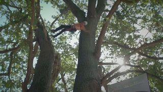 شاهد: فرنسا تتوج بلقب البطولة الأوروبية لتسلق الأشجار!