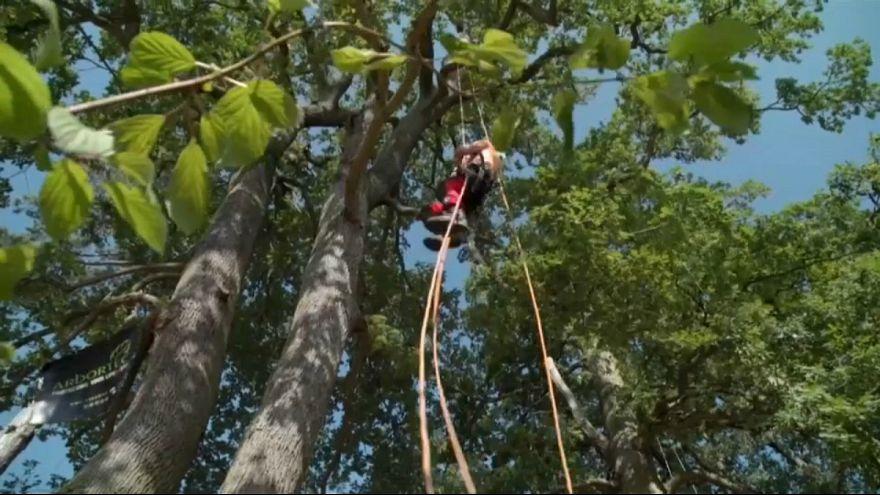 مسابقات اروپایی صعود از درخت در فرانسه