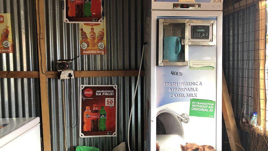Soğutucu otomatlar geldi Kenya'da deve sütü pazarı patladı