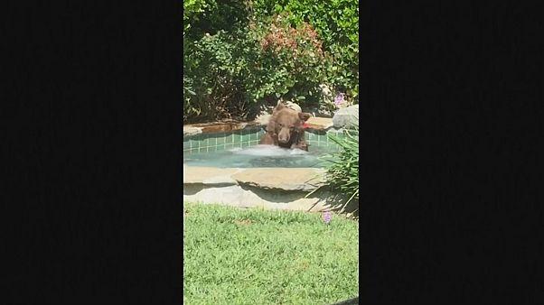 Watch: Margarita-loving bear relaxes in California hot tub