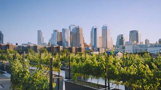 The world's first rooftop winery