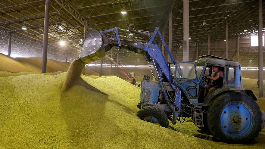 OECD-FAO: Gelecek 10 yılda tarım ürünleri fiyatları düşecek