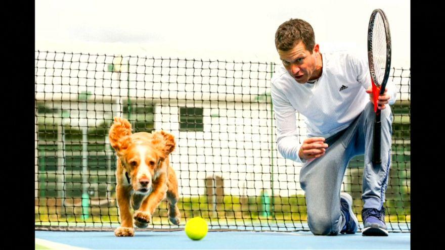 شاهد: تيم هينمان يدرب الكلاب على إحضار كرات التنس في بريطانيا