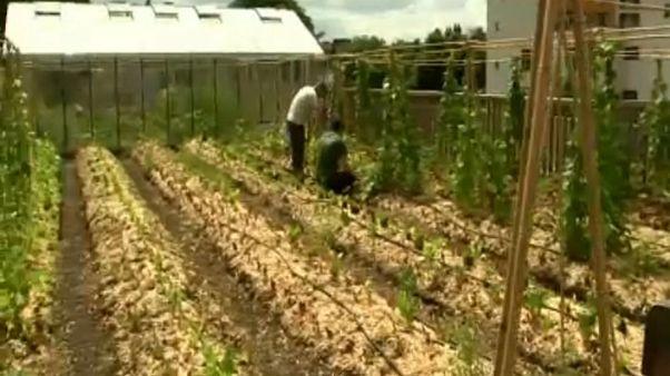Λαχανόκηπος σε ταράτσα σούπερ μάρκετ στο Βέλγιο
