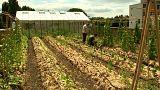 Belgio: un orto sul tetto del supermercato