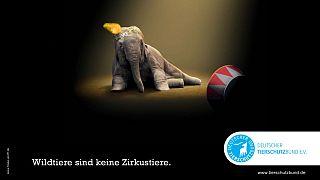 Eine Kampagne des Tierschutzbund gegen Wildtiere im Zirkus