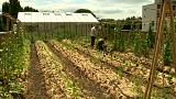 Venden productos cultivados en su tejado