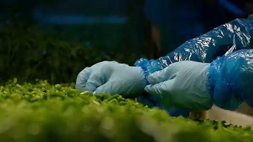 Nove vittime per verdure contaminate da Listeria