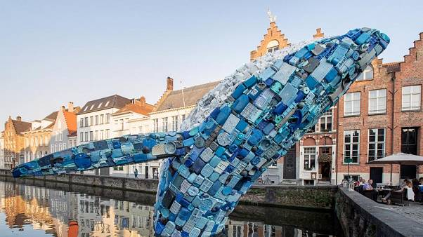 حوت ضخم بطول 12 مترا و 5 أطنان من النفايات البلاستيكية