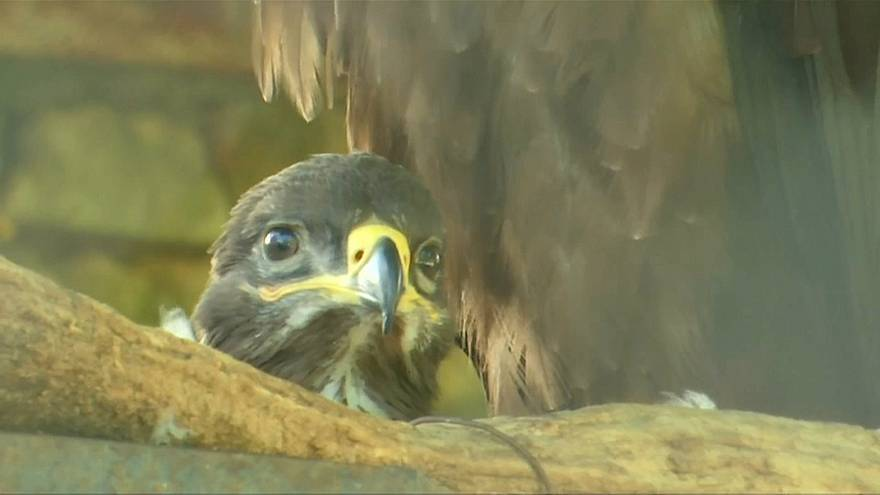 WM 2018: Igor Akinfeev lebt jetzt im Zoo