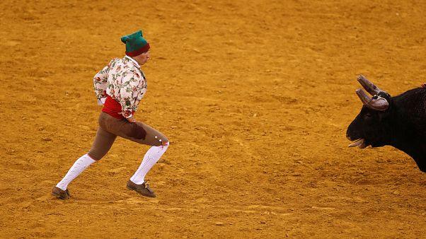 Parlamento chumba projeto do PAN para abolir corridas de touros em Portugal