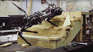 """تعرف على الروبوت """"شيتا"""" الأعمى القادر على أداء مهمات الإنقاذ الخطرة"""