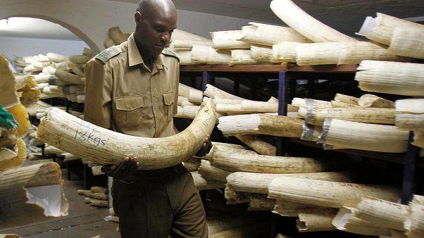 Avaaz denuncia venda ilegal de marfim na Europa