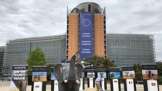 Az elefántokért tüntettek Brüsszelben