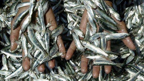 تقرير: المتوسط أكثر بحار العالم تعرضاً للصيد الجائر