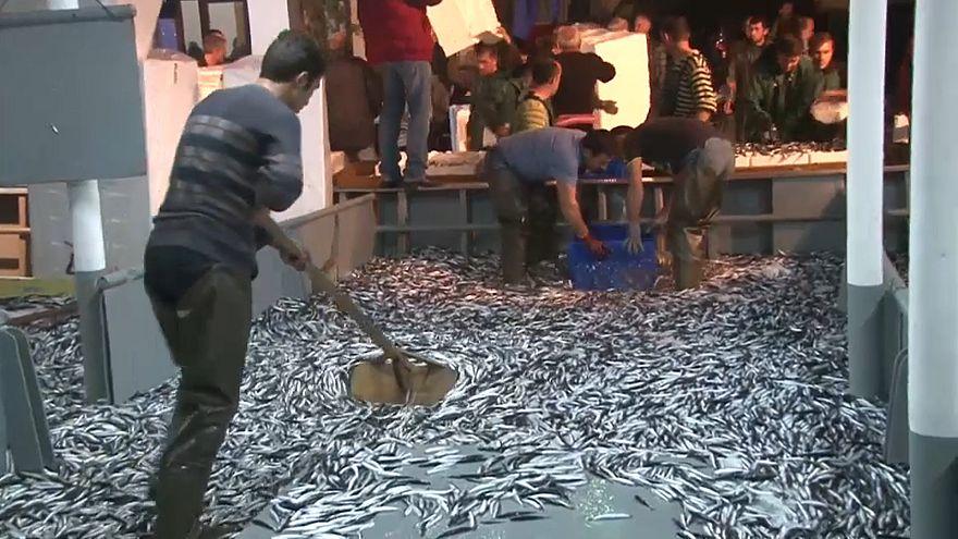 Balık israfında rekor artış: Avlanan balığın üçte ikisi çöpe gidiyor
