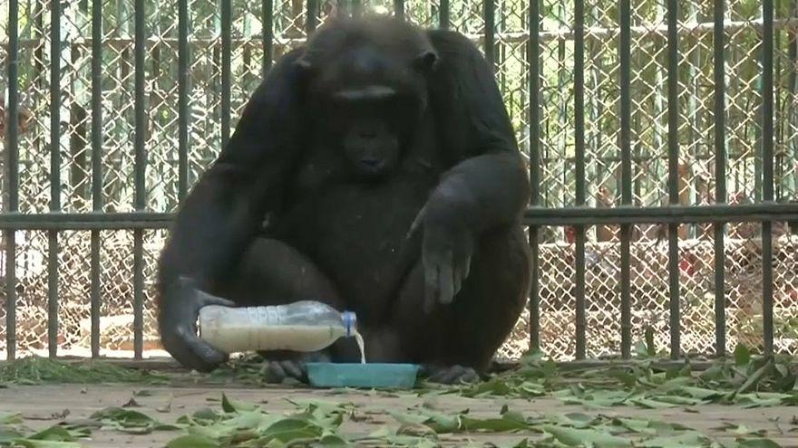 حديقة الحيوانات في مصر تلجأ لطريقة جديدة لمساعدة الحيوانات على مواجهة لهيب الجو