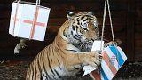 A tigris szerint a horvátok döntősök