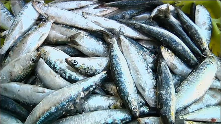 Sobrepesca ameaça mares da Europa