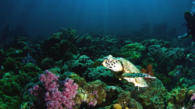Growing herbs and vegetables under the sea