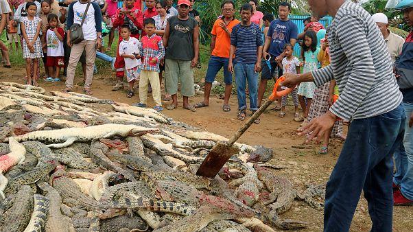 The bodies of crocodiles