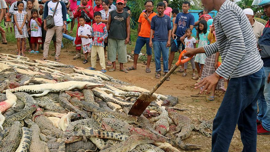 The bodies of crocodiles