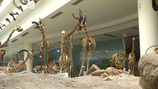 شاهد: محنطات الحيوانات المنقرضة والنادرة في المتحف الحيواني بالجيزة