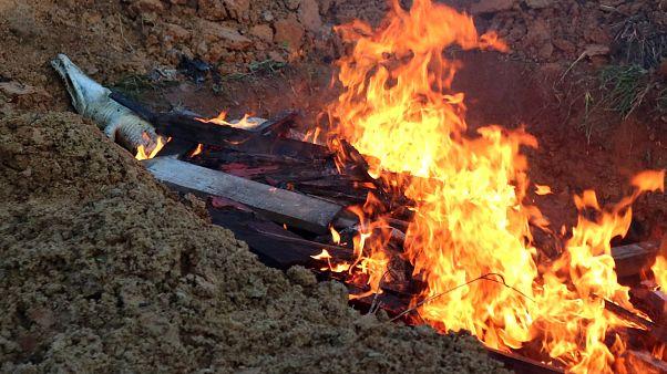 Indonésie : 300 crocodiles massacrés et incinérés, une vengeance...
