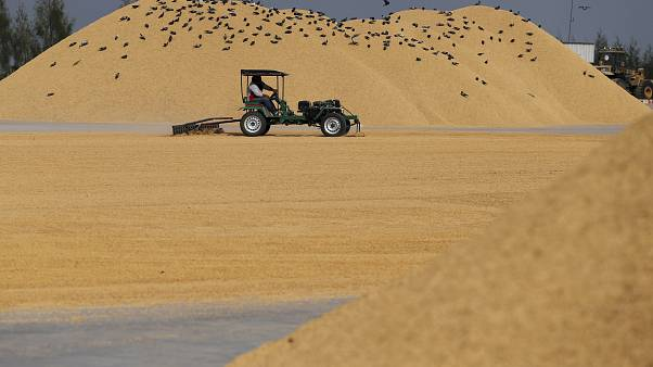 مصر تستورد مئات آلاف الأطنان من الأرز الشعير خلال العام المقبل