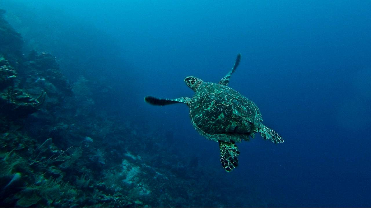 Watch how these turtles are protected in Costa Rica