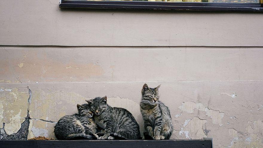 Összeszámolják a washingtoni cicákat