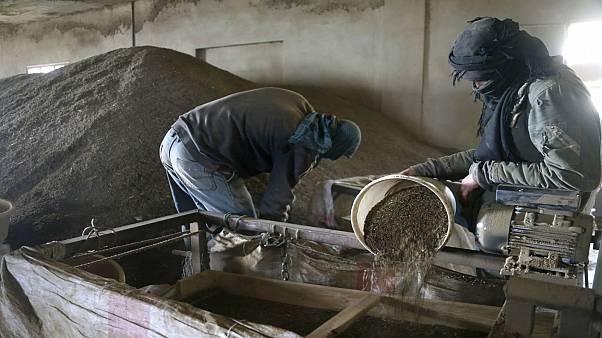 Men work inside a factory that proccesses Hashish in the Bekaa valley