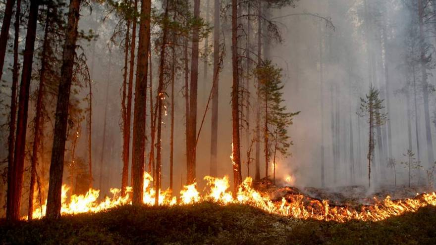 Wildfires rage in Arctic Circle as Sweden calls EU for help