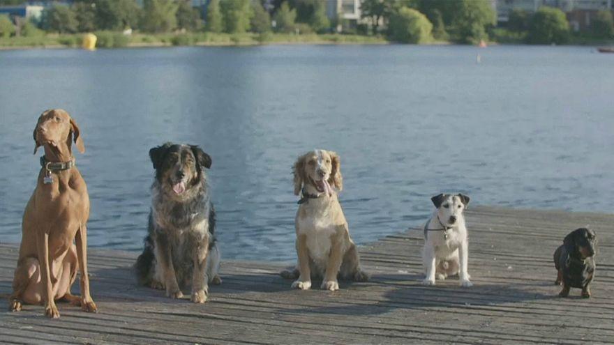 كلاب في لندن تتغلب على حرارة الصيف باللهو والسباحة!