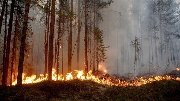 İsveç orman yangınlarını söndürmek için AB ülkelerinden yardım istedi