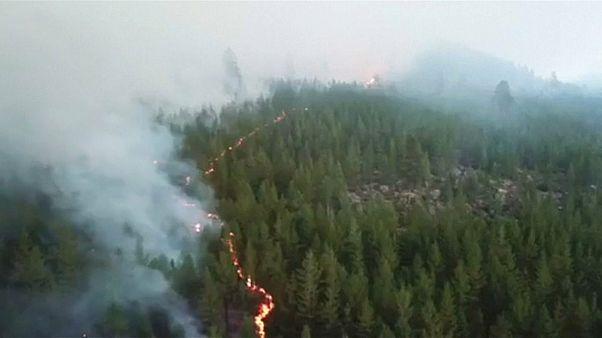 Лесные пожары: Швеция просит помощи