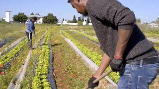 Menekültgazdaság: Portugál kísérlet