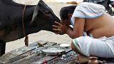 هندوس يقتلون مسلما تقديسا للبقر
