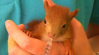 Hitzealarm in der Eichhörnchen-Hilfe