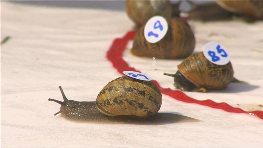 snail racing world championships