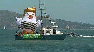 """شاهد : """"دجاجة ترامب"""" تتجول في سان فرانسيسكو"""