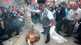 Farmers protest livestock cull in Bulgaria after rinderpest outbreak