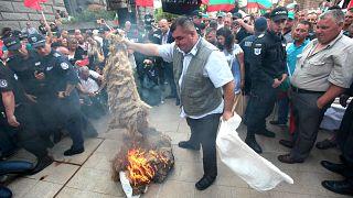 Bulgaristan'da hayvanları öldürülen çiftçiler protesto yapıyor