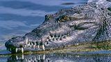 Ausgebrochen - und jetzt am Strand? Phuket jagt das 3-Meter-Krokodil