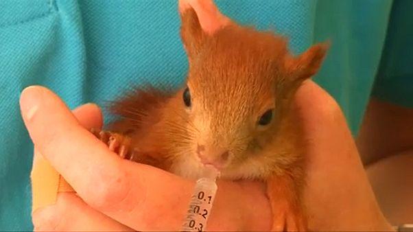 Élelem és víz kell a mókusoknak a forró nyárban