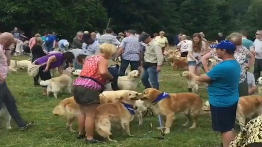 """شاهد: اسكتلندا تحتفل بالذكرى الـ150 لتكاثر سلالة كلاب """"الذهبي المسترد"""""""